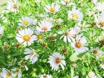 Vildblommor i solljuset på fältet Purpurfärgad wild blomma Arkivfoto