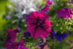 Vildblommor i trädgården, Polen Royaltyfria Bilder