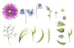 Vildblommor i vattenfärg royaltyfri illustrationer