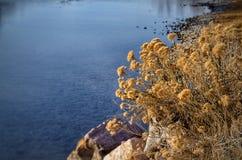Vildblommor i vinter längs banken av Arkansaset River Royaltyfria Bilder