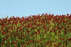 Vildblommor med blå himmel Royaltyfri Fotografi