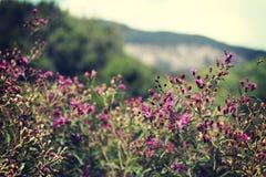 Vildblommor med en sikt Arkivfoto
