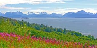 Vildblommor och berg förbi och havfjärd arkivbilder