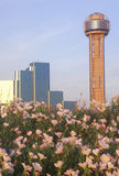 Vildblommor och Dallas, TX-horisont på solnedgången med mötetornet Arkivfoto