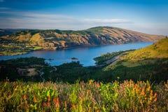 Vildblommor och sikt på Tom McCall Nature Preserve, Columbia Riv royaltyfri foto