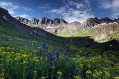 Vildblommor på den amerikanska handfatet i Colorado Rockies Arkivbilder