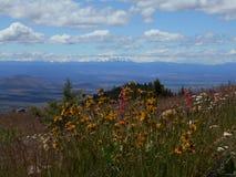 Vildblommor på det gråsprängda berget Arkivfoto