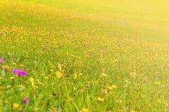 Vildblommor på en äng i en solig dag Royaltyfri Fotografi