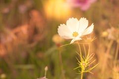 Vildblommor på en äng i en solig dag Royaltyfria Foton