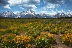 Vildblommor på storslagna Tetons royaltyfri bild