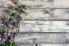 Vildblommor på trätabellen Arkivbilder