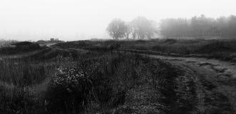 Vildblommor, pinjeskog och övergiven bil i dimma fotografering för bildbyråer