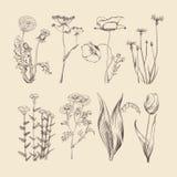 Vildblommor, örter och blommor Botanisk vektorsamling för vår eller för sommar Royaltyfri Bild