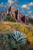 Vildblommor som blomming på Brins Mesa nära Sedona, Arizona royaltyfria bilder