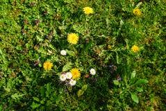 Vildblommor som växer i en trädgård Arkivbild