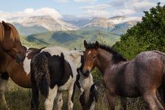 Vildhästar frigör i parkera royaltyfri bild