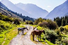Vildhästar i naturen Arkivfoto