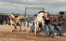 Vildhästar på den yrkesmässiga rodeon Arkivfoton
