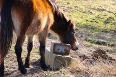 Vildhästar sätter hans huvud på kvarteret Arkivfoton
