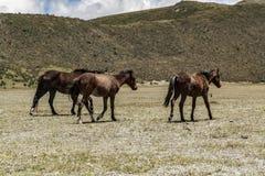 Vildhästar som går i en nationalpark royaltyfri fotografi