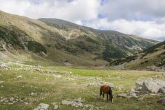 Vildhästen i Retezat berg Arkivbilder