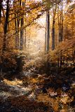vildmark fotografering för bildbyråer