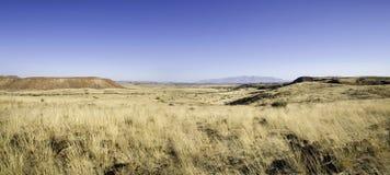 Vildmark i Namibia Royaltyfria Bilder