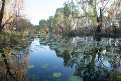 Vildmarkflodlandskap Millstream Australien royaltyfri foto