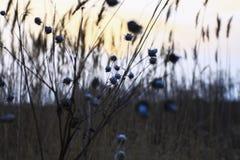 Vildmarkhöet Fotografering för Bildbyråer