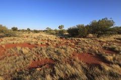 Vildmarklandskap - Australien Royaltyfria Bilder