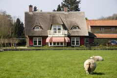 Villa. With a view at sheep stock photo