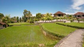 Villa au milieu des rizières idylliques dans Ubud Photos stock
