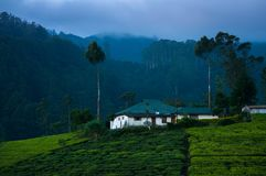 Villa blanche dans la plantation de thé la nuit Image libre de droits