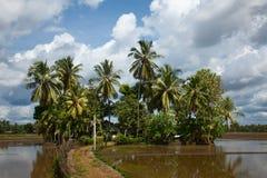 Villa con gli alberi di palma circondati da acqua Immagine Stock Libera da Diritti