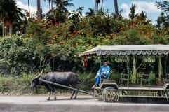 Villa Escudero, Tiaong, San Pablo, Filippine di giro del carretto del Carabao fotografia stock libera da diritti