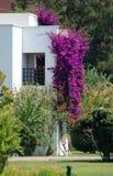 Villa et fleurs Image stock