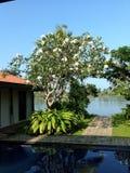 Villa Frangipani. By the lake Stock Image