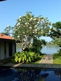 Villa Frangipani Stock Image