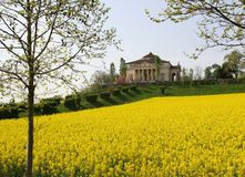 Villa La Rotonda with yellow flower field of rapeseed in Vicenza Stock Photo