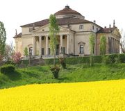 Villa La Rotonda with yellow flower field of rapeseed in Vicenza Royalty Free Stock Photo
