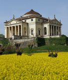 Villa La Rotonda with yellow flower field of rapeseed in Vicenza Royalty Free Stock Photos