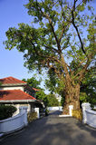 Villa with a large banyan tree Royalty Free Stock Photos