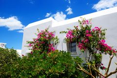 The villa at luxury hotel and flowers Stock Images