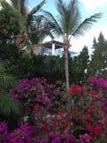 Villa Plant Flowers Trees Bush. Anguilla Island Green Resort Stock Photos