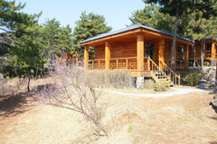 Villa. The scenery of wooden villa in pine trees Royalty Free Stock Photography