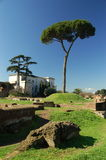 Villa & tree on the Palatine Hill in Rome Royalty Free Stock Photos