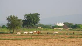 village images libres de droits
