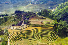Village agriculture Terraced Rice Field hill Royalty Free Stock Photo