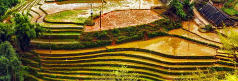 Village agriculture Terraced Rice Field hill Royalty Free Stock Photos