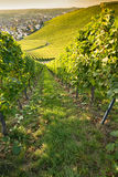 Village allemand de vin Weinstadt Beutelsbach avec le vignoble Photo stock